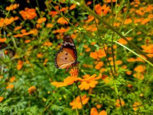 butterfly on golden flowers